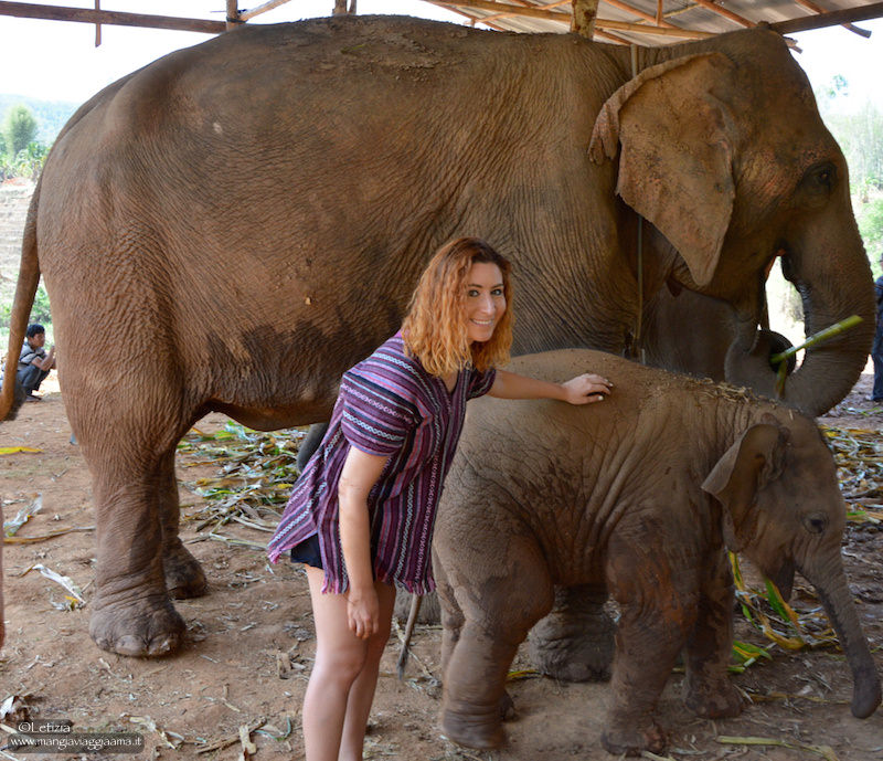 Elephant Jungle Sanctuary Thailandia
